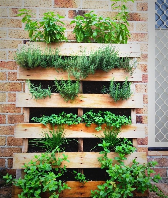pallet herb garden a source of natural remedy pallet