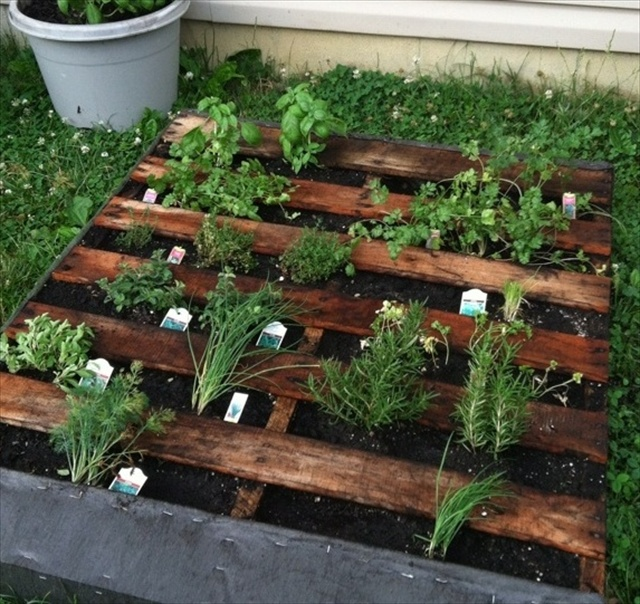 Pallet Herb Garden A Source Of Natural Remedy