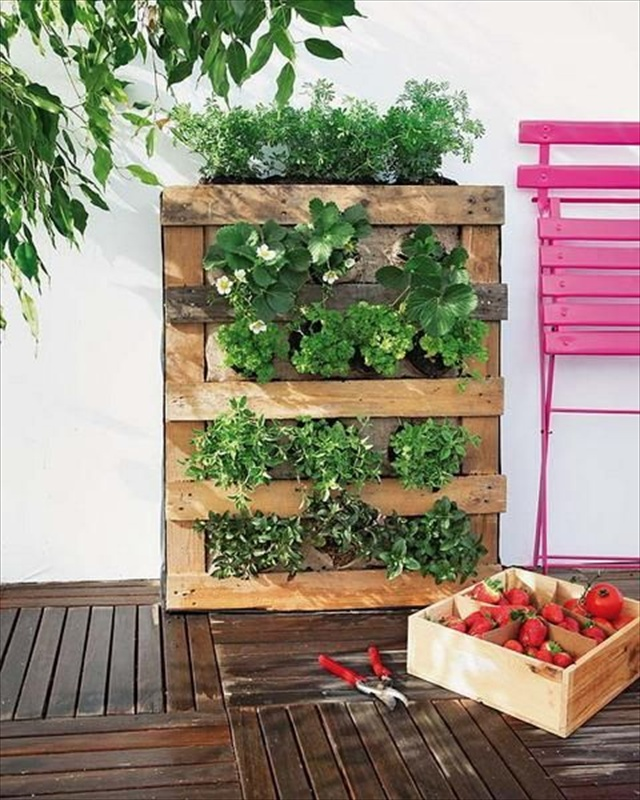 Vertical gardening out of recycle pallets pallet for Gardening using pallets