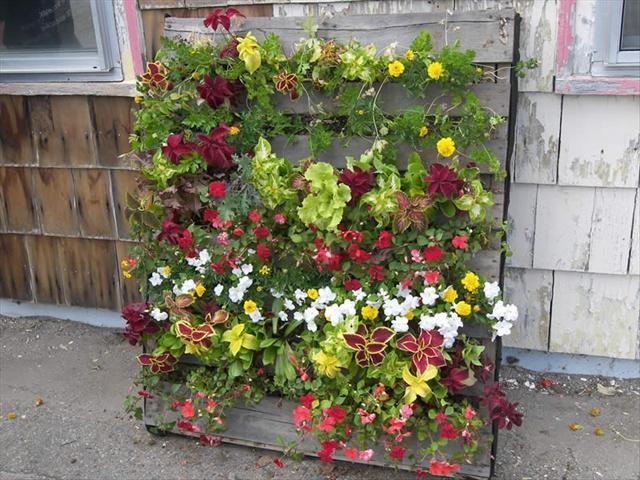 גינת משטח לגידול אנכי של פרחים, ירקות, תבלינים וירוקים