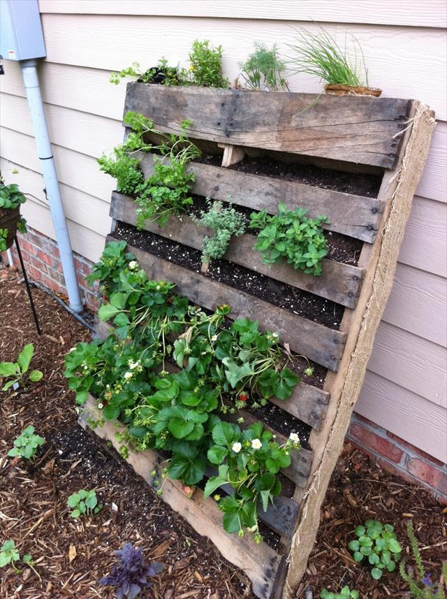 25 diy pallet garden projects pallet furniture plans for Vertical pallet garden