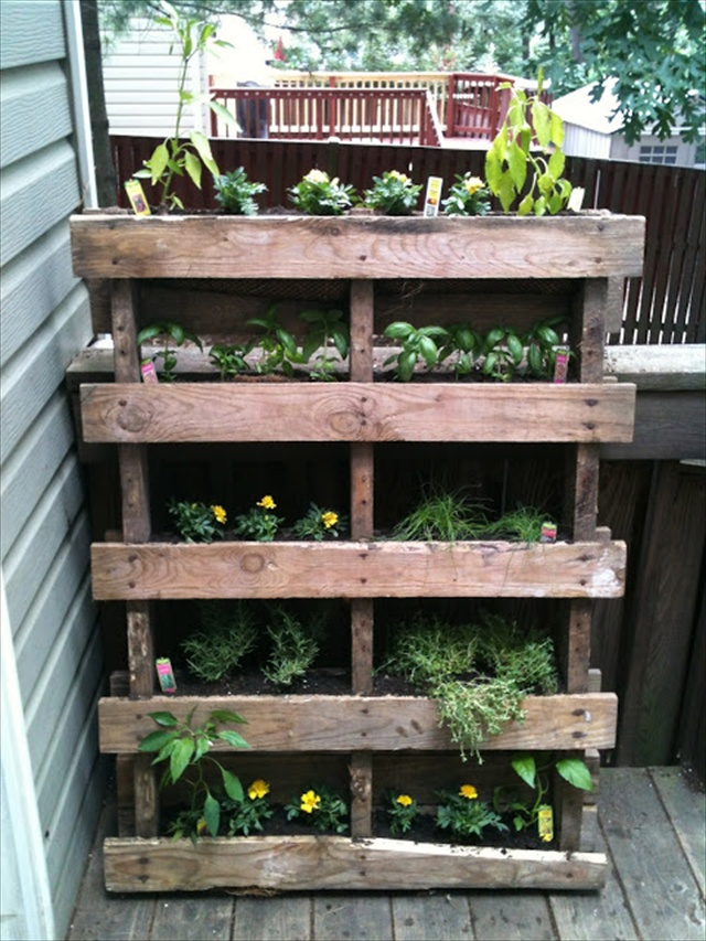 DIY Vertical Garden with Pallet
