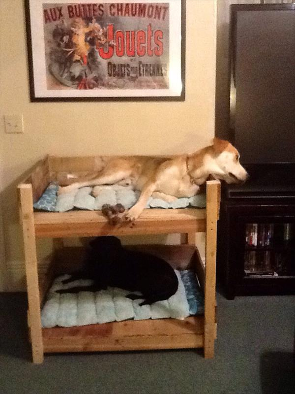 DIY Pet Bunk Bed - Plans to Build Dog Bed | Pallet Furniture Plans