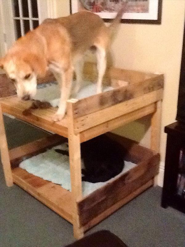 diy pet bunk bed plans to build dog bed pallet. Black Bedroom Furniture Sets. Home Design Ideas